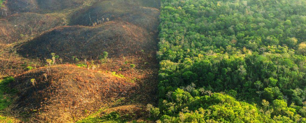 نابودب جنگل ها به دست انسان ها